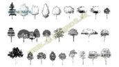 بلاک اتوکد نمای درختان متنوع